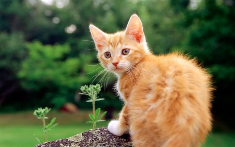 1920猫咪写真 2 3壁纸 1920猫咪写真壁纸 1920猫咪写真图片 1920猫咪