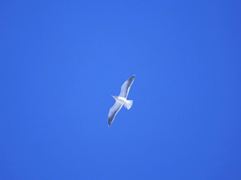 飞翔的白鸽与花草植物psd分层素材
