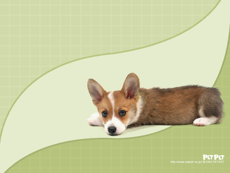 超可爱动物专辑壁纸,超可爱动物壁纸壁纸图片-动物
