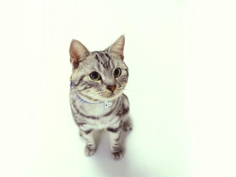 可爱的小猫咪