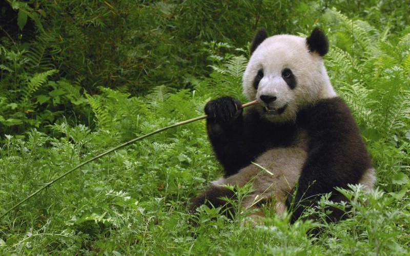 并与世界野生生物基金会合作建立中国保护大熊猫研究中心.