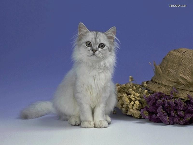 可爱小猫咪桌面壁纸 街角的小猫咪摄影高清 可爱小狗电脑桌面壁纸