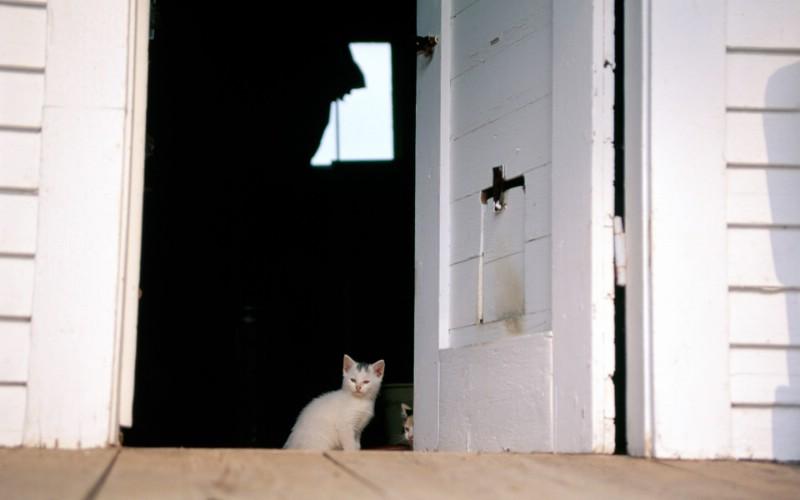 高清可爱猫咪写真壁纸 高清可爱猫咪写真壁纸 高清可爱猫咪写真图片