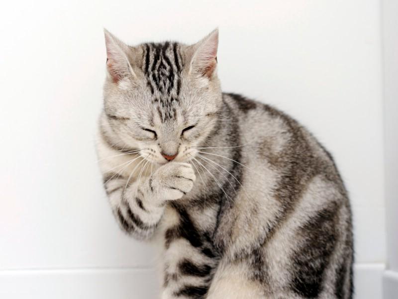 高清可爱小猫咪壁纸