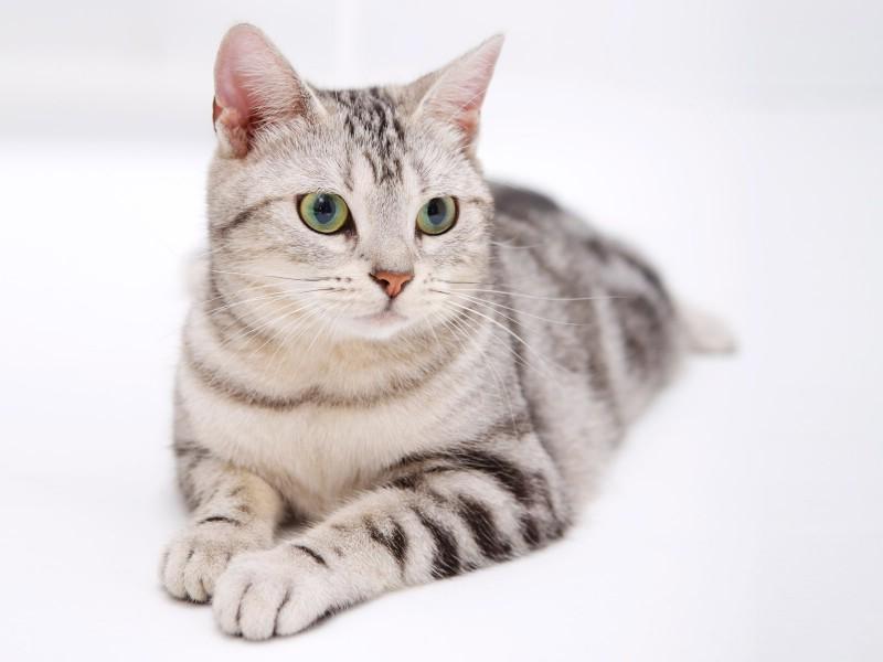 高清可爱小猫咪壁纸壁纸,高清可爱小猫咪壁纸