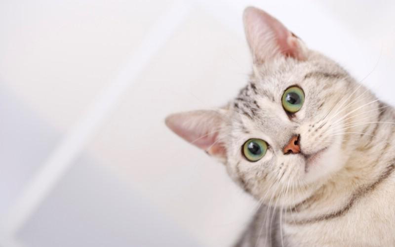 高清可爱小猫咪壁纸壁纸