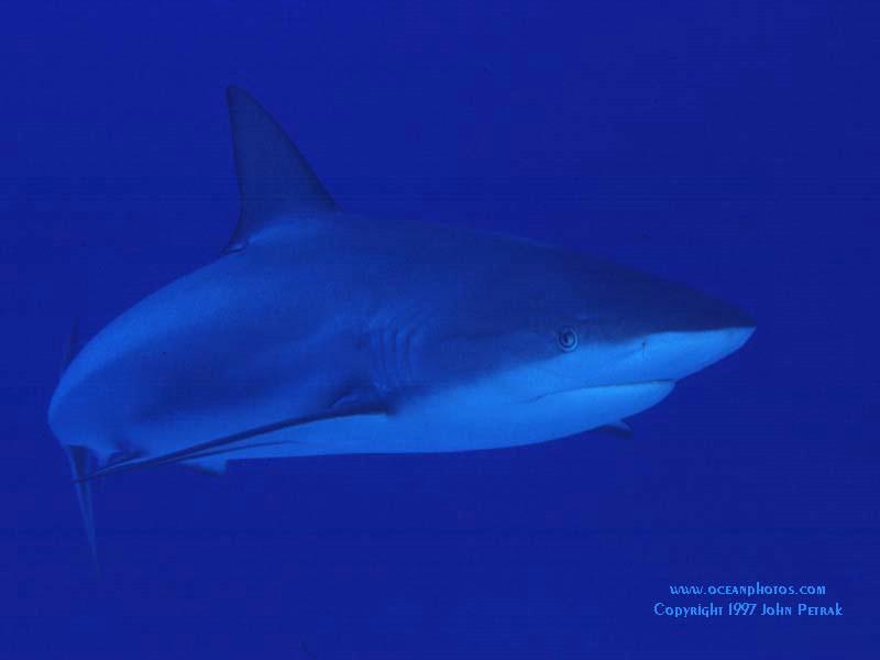 海底世界壁纸 海底世界壁纸 海底世界图片 海底世界素材 动物壁纸