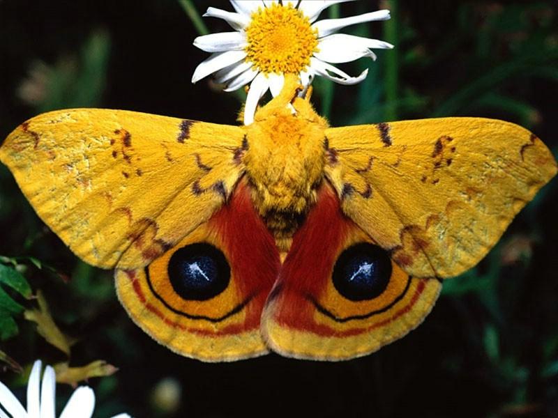 胡蝶图片大全可爱图片
