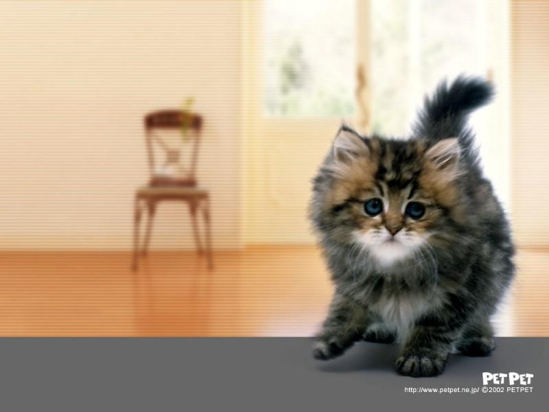 可爱宠物图片 可爱宠物素材 动物壁纸 动物图库 动物图片素材桌面壁纸