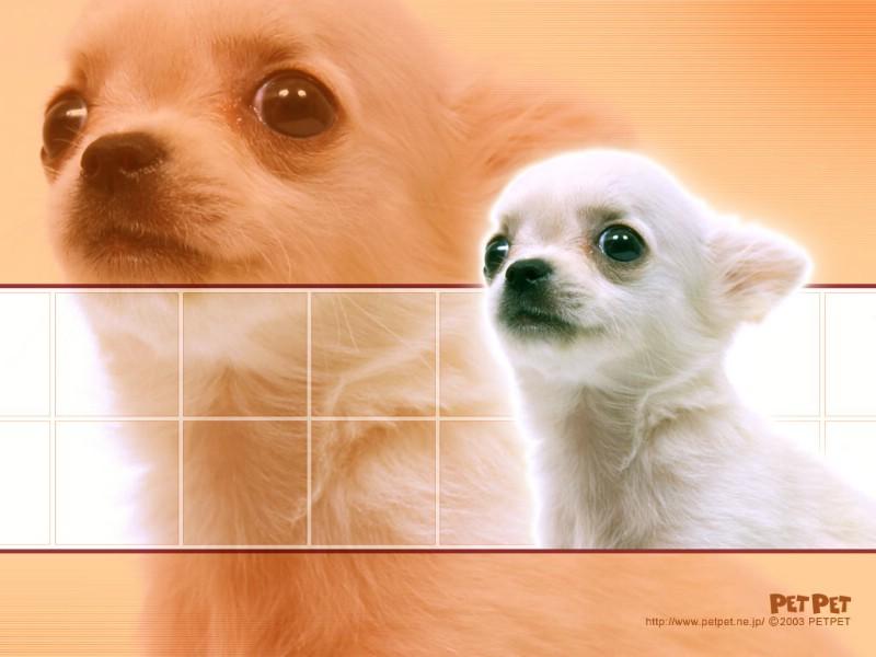 [大全]桌面壁纸逗搞笑猫::电脑桌面壁纸萌宠猫::猫咪