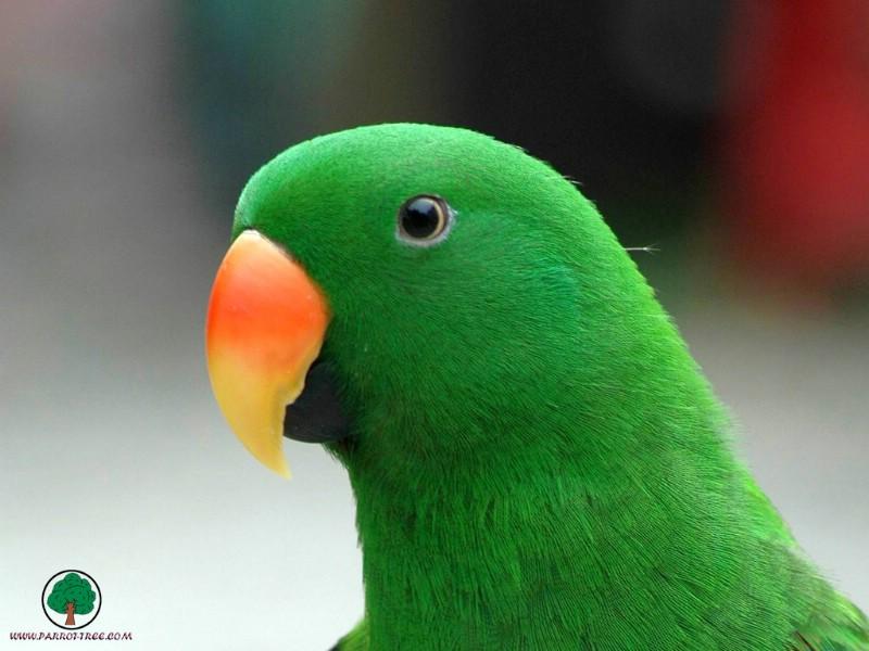 可爱多色彩鹦鹉壁纸