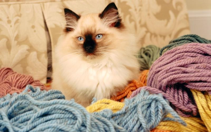 1920猫咪写真 1 20壁纸,可爱猫咪 1920猫咪写真 第一