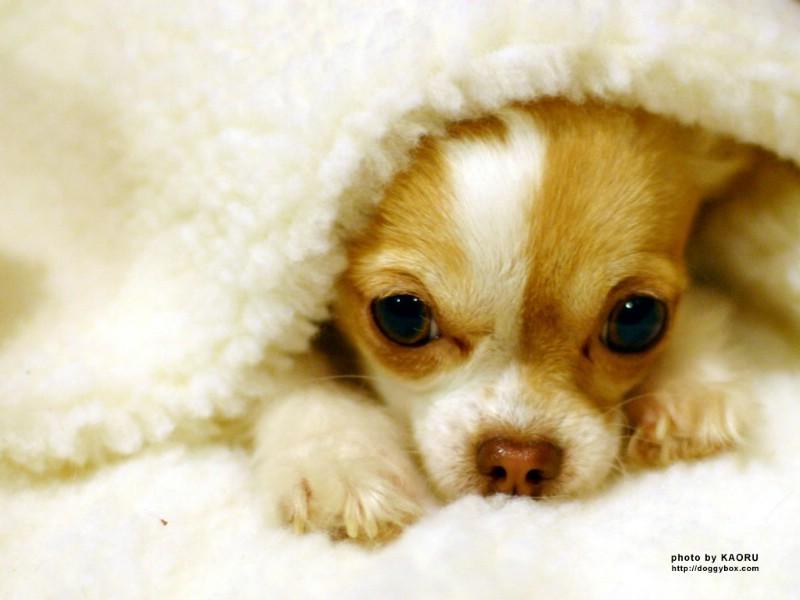十二星座的可爱小狗狗