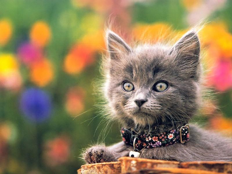 小猫的真实写照 其他类型||猫咪||萌宠 可爱小猫萌照 其他类型||猫咪