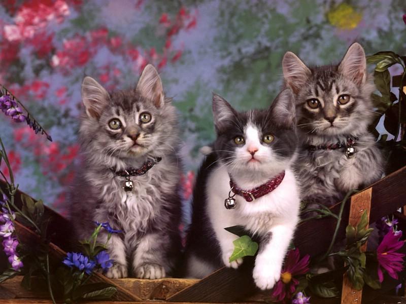 画中的可爱猫咪 其他类型||猫咪||萌宠 其他类型||猫咪||萌宠 其他
