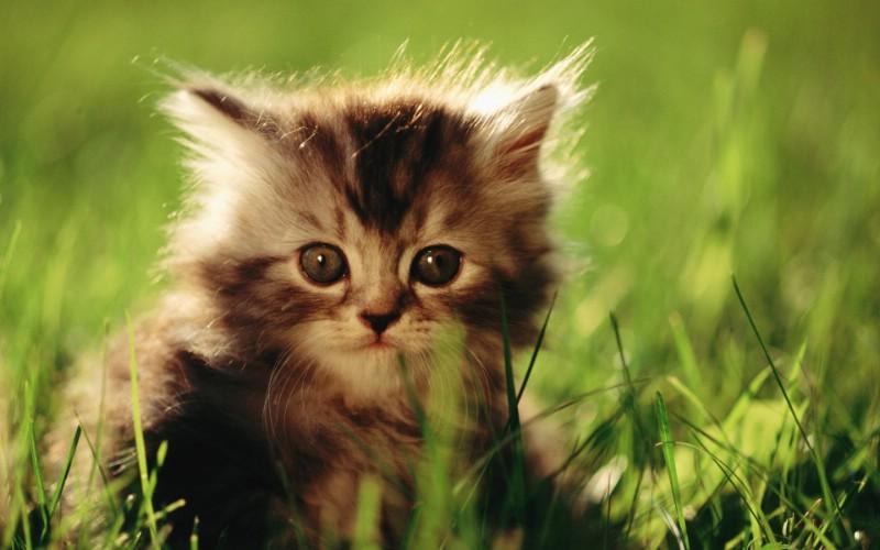 可爱小猫咪宽屏壁纸图片