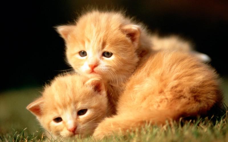 可爱小猫咪宽屏壁纸壁纸
