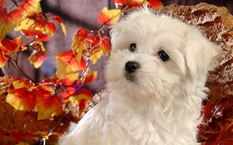 可爱白色小狗狗图片 1920 1200