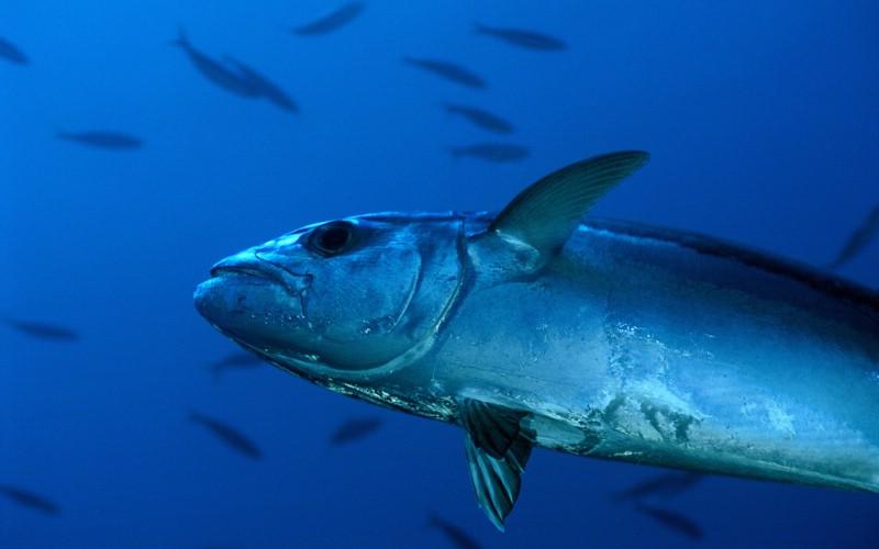 壁纸 动物 海底 海底世界 海洋馆 水族馆 鱼 鱼类 800_500
