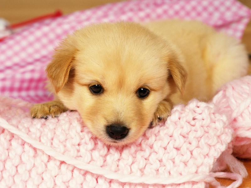 9 - Best dogs for small spaces pict ...