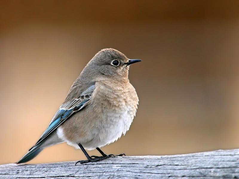 野生鸟类摄影壁纸 野生鸟类摄影壁纸 野生鸟类摄影