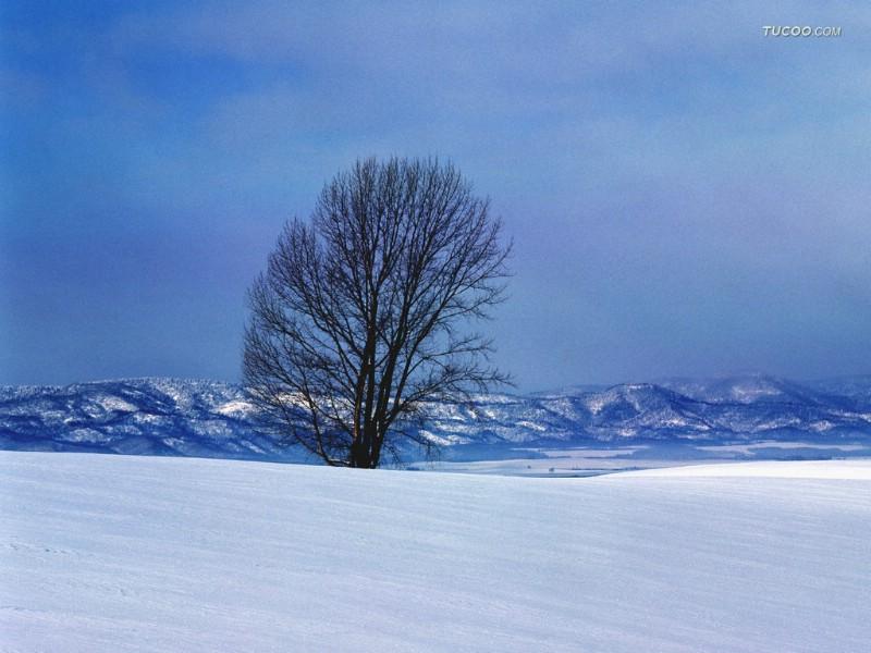 japan nature wallpaper winter