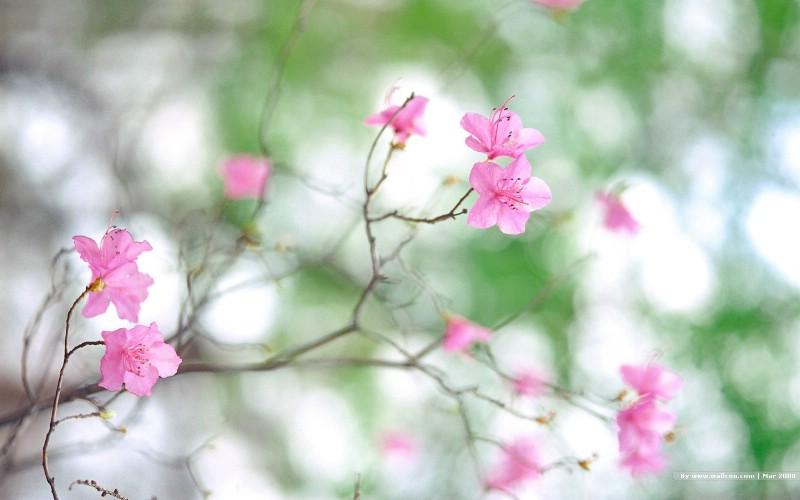 春天风景图片 春季摄影
