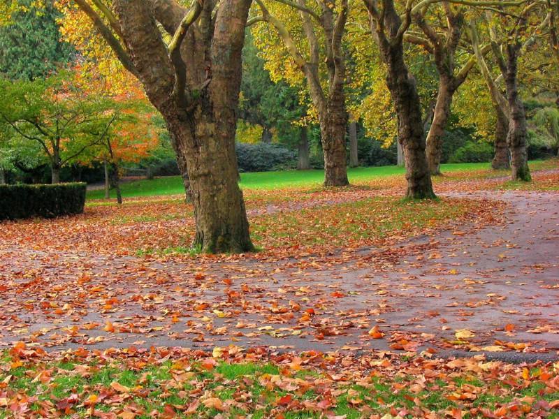 秋姑娘来了!秋姑娘来了!乘着凉爽的风来了,骑着洁白的云来了! 道路两旁的大树,不知什么时候换上了黄色的外衣,一阵秋风吹过,金黄的落叶纷纷扬扬,像蝴蝶在翩翩起舞。田野里,一片片的玉米咧开嘴笑着,露出满口金灿灿的牙齿。那满坡的豆子,浑身结满了豆荚,秋风中像风铃叮叮当当唱起歌来。一边的高粱像喝醉酒的大汉,从脸上一直红到脖子。望着这丰收的景象,人们的脸上露出满意的笑容。 一分耕耘一分收获,秋天是收获的季节,是美丽的季节,我爱秋天!