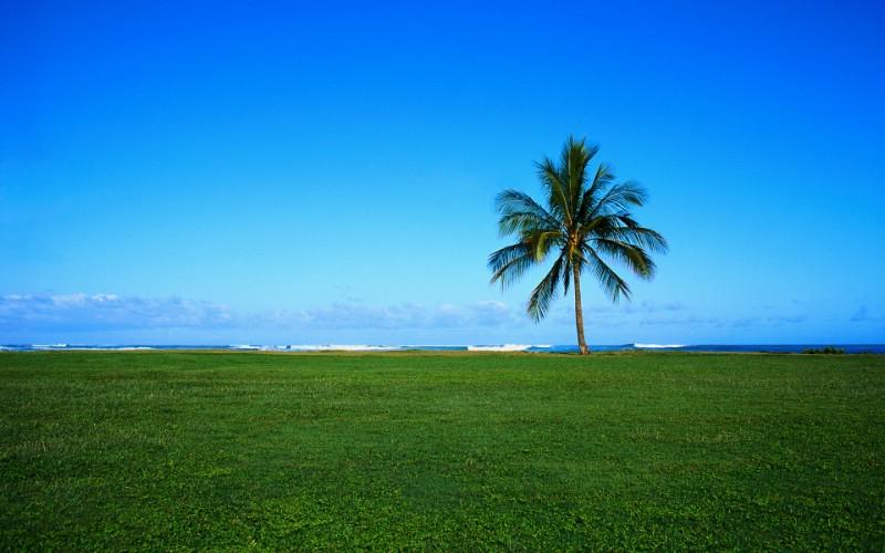 大自然纯朴之美 草原海岸上椰子树壁纸图片壁