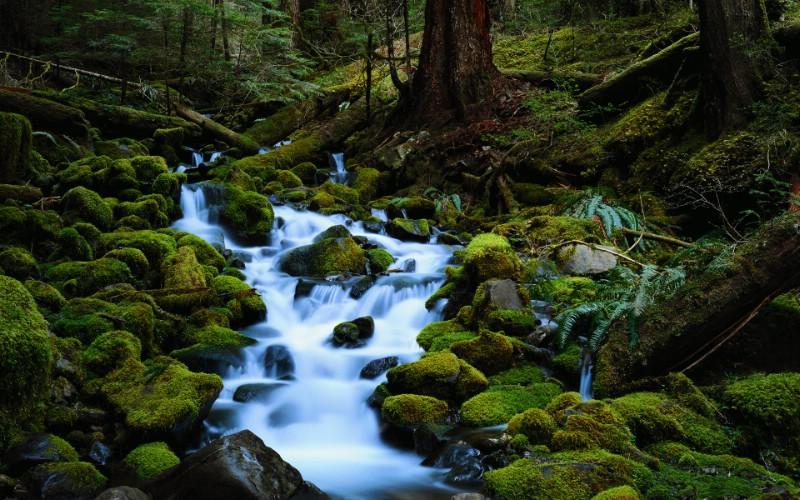 森林的小溪流水壁纸图片壁纸