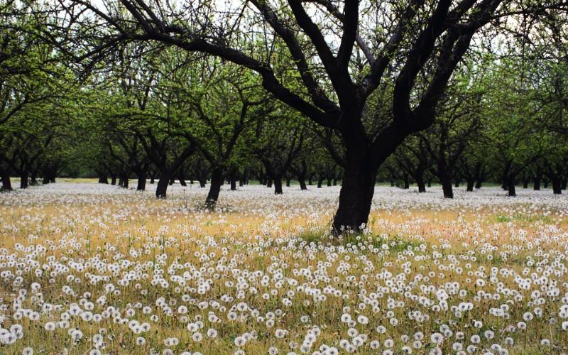 大自然纯朴之美 一片白色的蒲公英壁纸图片壁纸壁纸 大自然纯朴之美壁纸 大自然纯朴之美图片 大自然纯朴之美素材 风景壁纸 风景图库 风景图片素材桌面壁纸