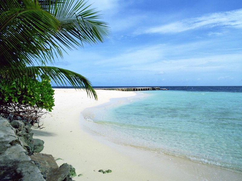海滩天空椰树1 壁纸20壁纸 海滩天空椰树1壁纸