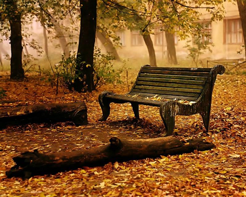 秋天唯美壁纸图片黄昏落叶优美森林珍藏壁纸