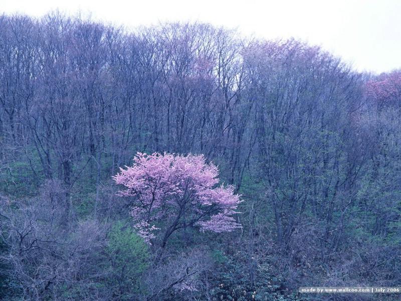 茂盛森林树木 树木成荫 春天树木图片壁纸 De
