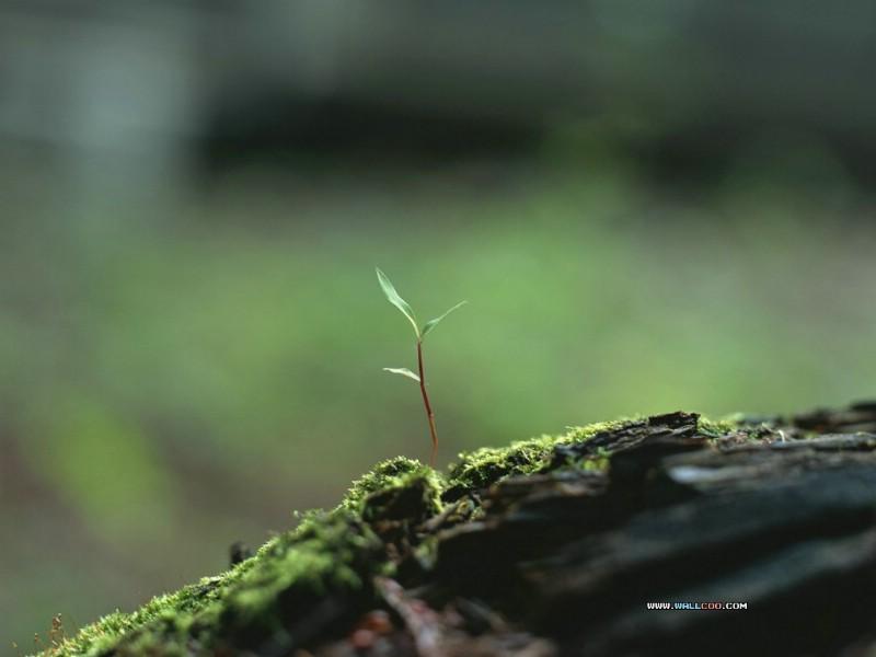 春天新发芽的叶子图片
