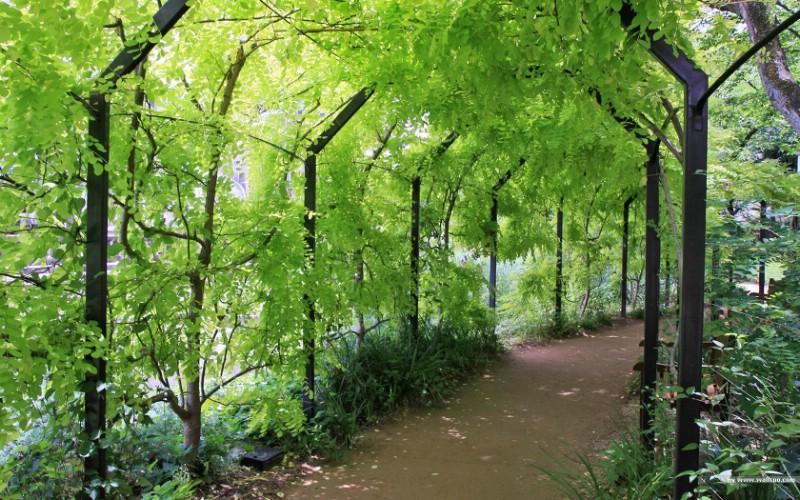 宁静庭园 公园美景壁纸壁纸 宁静庭园 公园美景