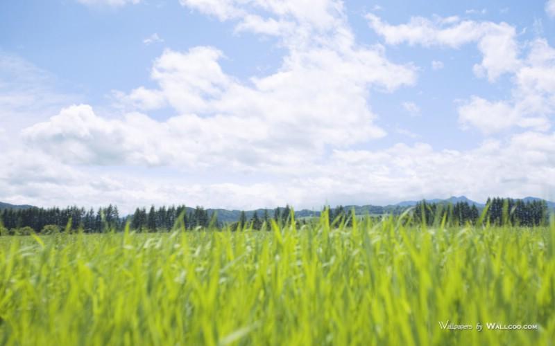 原野草原草地图片 vast grassland photography壁纸 青青草原草原天空