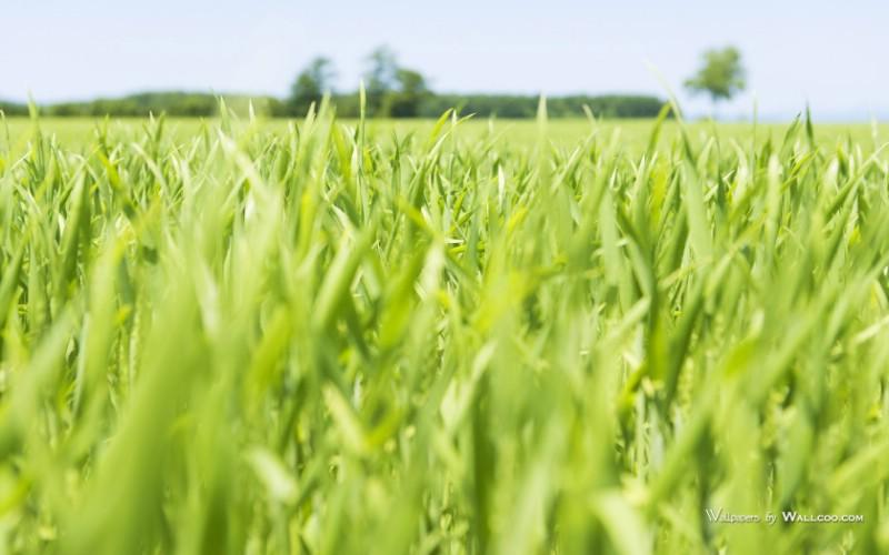 green grass photos close shot of grassland壁纸 青青草原草原天空
