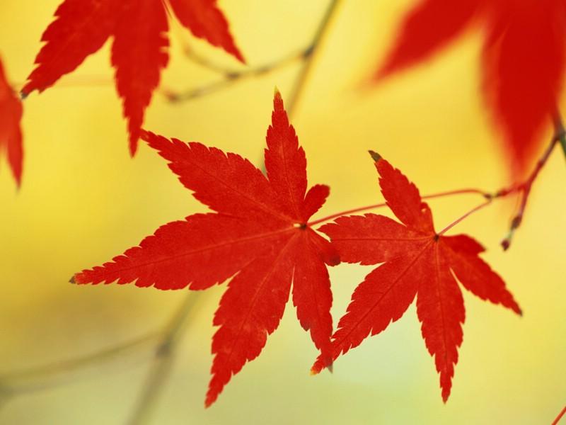 秋季剪影 秋天印象 秋天的落叶图片壁纸 Desktop Wallpaper of Autumn