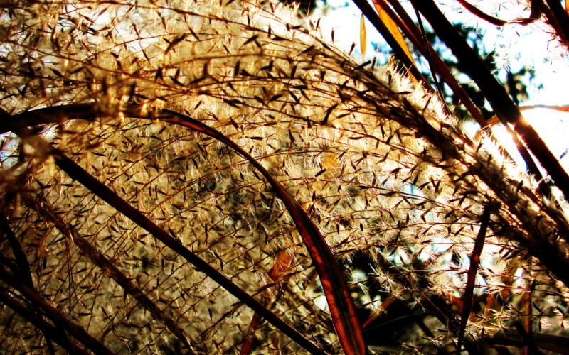 日本随拍之游 风光风景植物宽屏壁纸 壁纸3壁纸 日本随拍之游 风光风壁纸 日本随拍之游 风光风图片 日本随拍之游 风光风素材 风景壁纸 风景图库 风景图片素材桌面壁纸
