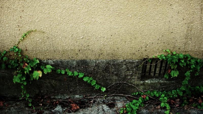 日本随拍之游 风光风景植物宽屏壁纸 壁纸5壁纸 日本随拍之游 风光风壁纸 日本随拍之游 风光风图片 日本随拍之游 风光风素材 风景壁纸 风景图库 风景图片素材桌面壁纸