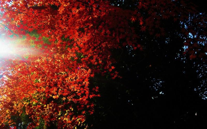 日本随拍之游 风光风景植物宽屏壁纸 壁纸10壁纸 日本随拍之游 风光风壁纸 日本随拍之游 风光风图片 日本随拍之游 风光风素材 风景壁纸 风景图库 风景图片素材桌面壁纸