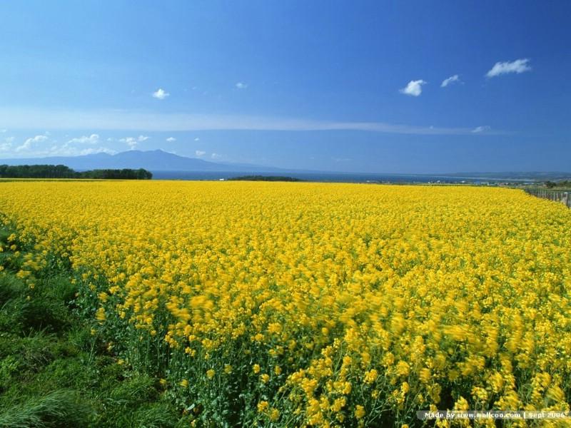 瘦西湖春天景色的描写