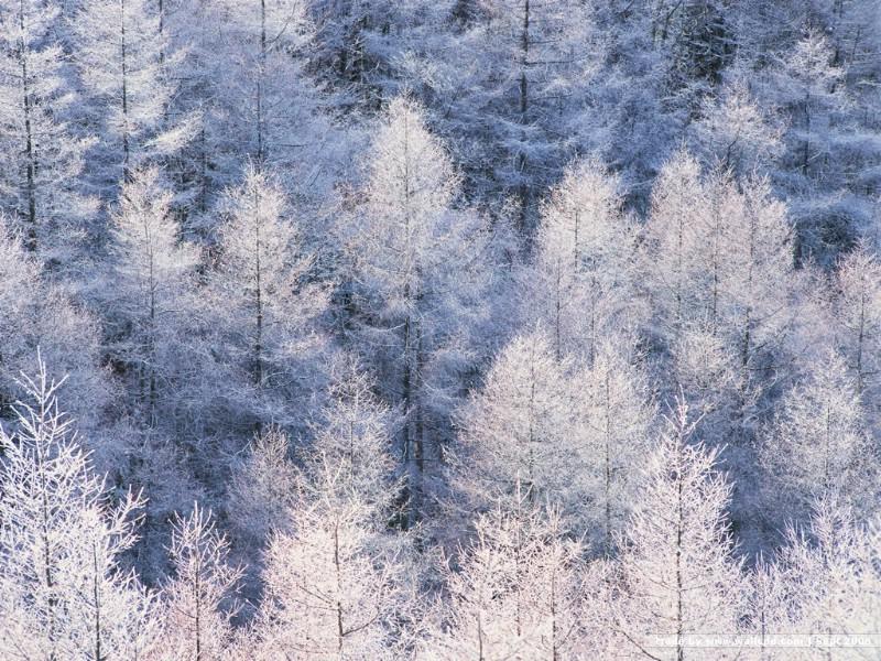 四季美景 冬天 冬天雪景图片壁纸 desktop wall