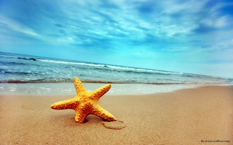 海星图片,沙滩海星图片