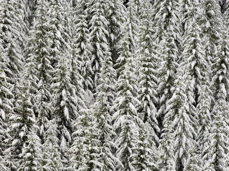 雪景图片 美丽冬天雪景壁纸壁纸 雪景图片 美丽冬天雪景壁纸壁纸 雪景图片 美丽冬天雪景壁纸图片 雪景图片 美丽冬天雪景壁纸素材 风景壁纸 风景图库 风景图片素材桌面壁纸