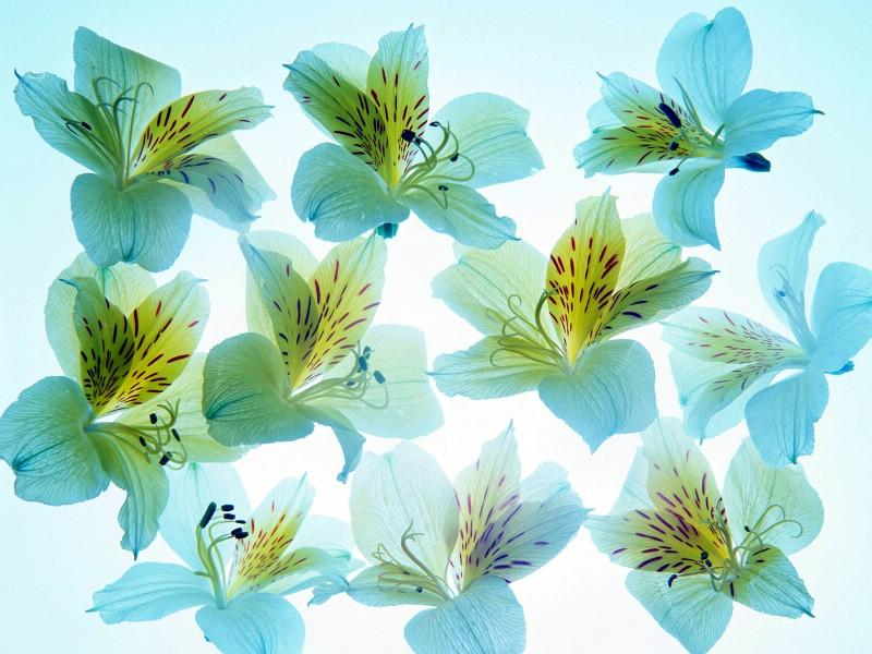 1600花朵背景 2 12壁纸 1600花朵背景壁纸 1600花朵背景图片 1600花朵背景素材 花卉壁纸 花卉图库 花卉图片素材桌面壁纸