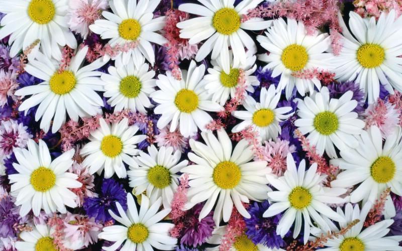 1920花朵背景 2 20壁纸 1920花朵背景壁纸 1920花朵背景图片 1920花朵背景素材 花卉壁纸 花卉图库 花卉图片素材桌面壁纸