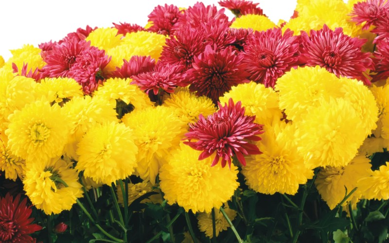 1920花朵背景 3 14壁纸 1920花朵背景壁纸 1920花朵背景图片 1920花朵背景素材 花卉壁纸 花卉图库 花卉图片素材桌面壁纸