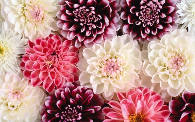 1920花朵背景 3 12壁纸 1920花朵背景壁纸 1920花朵背景图片 1920花朵背景素材 花卉壁纸 花卉图库 花卉图片素材桌面壁纸
